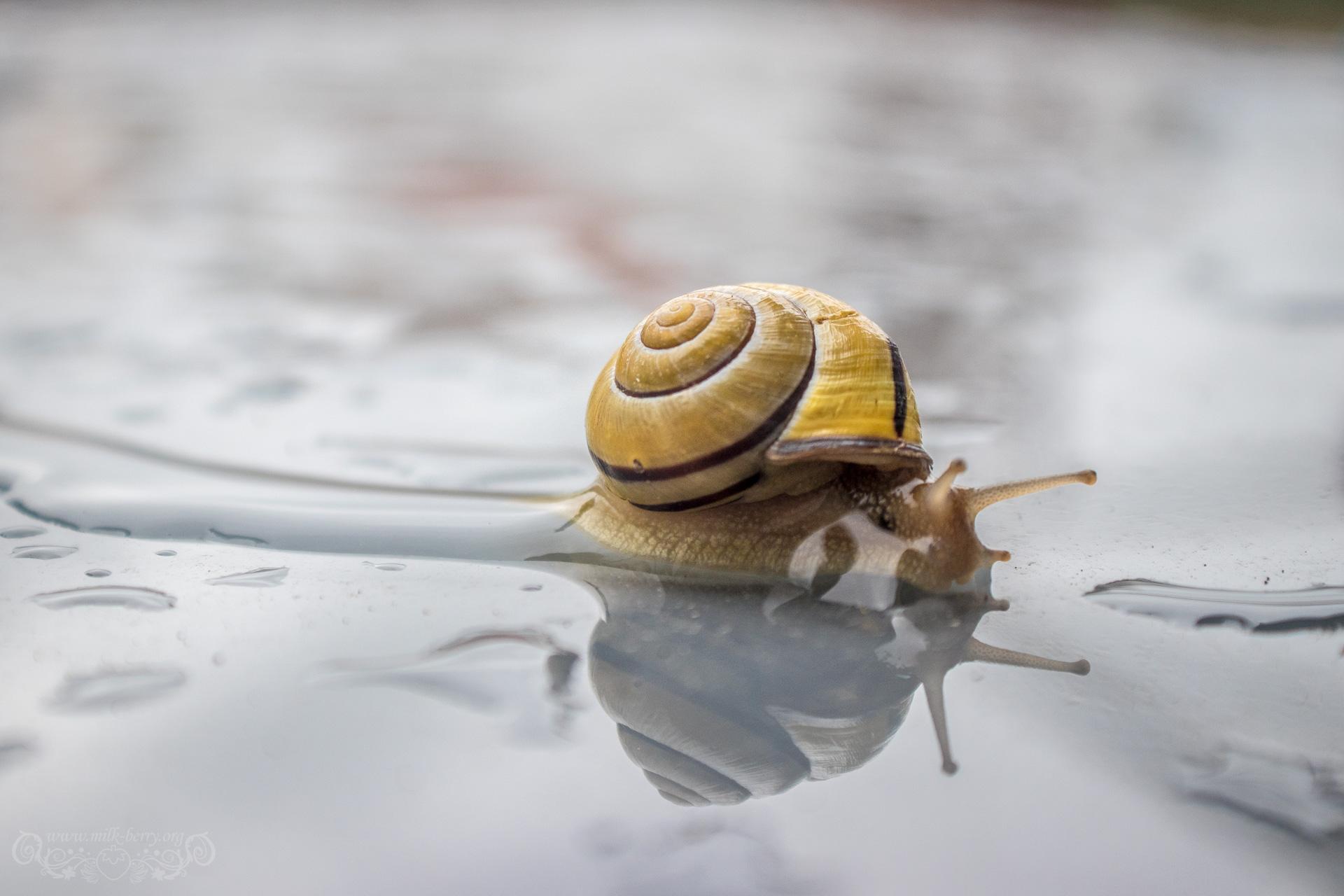 snail09
