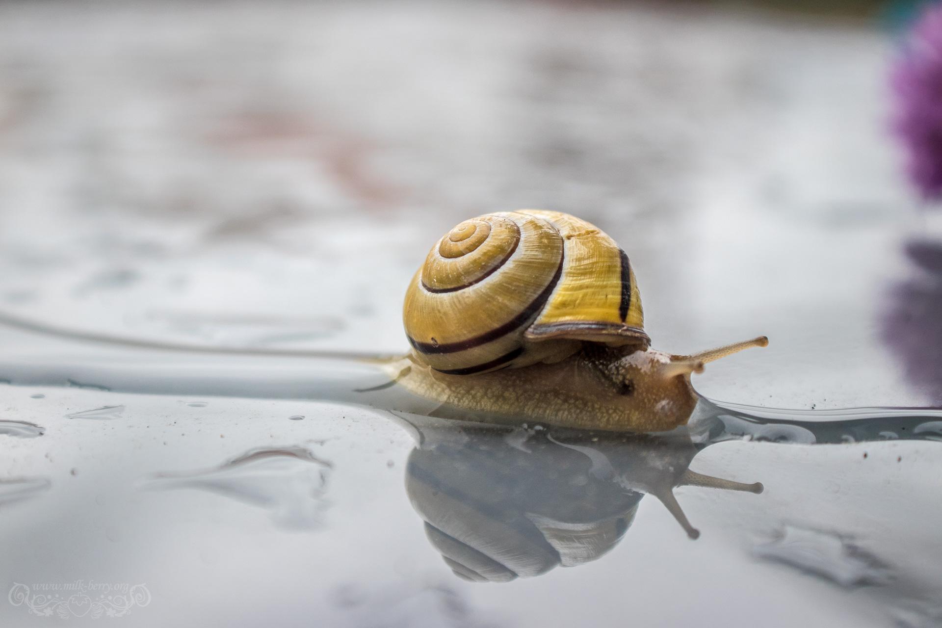 snail10