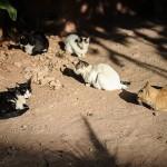 Les chats au Maroc