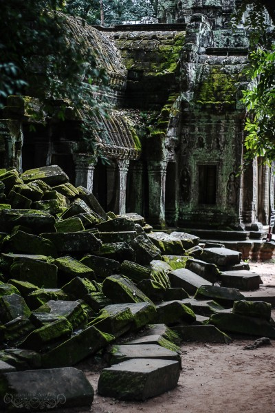 Angkor - Ta Prohm Temple