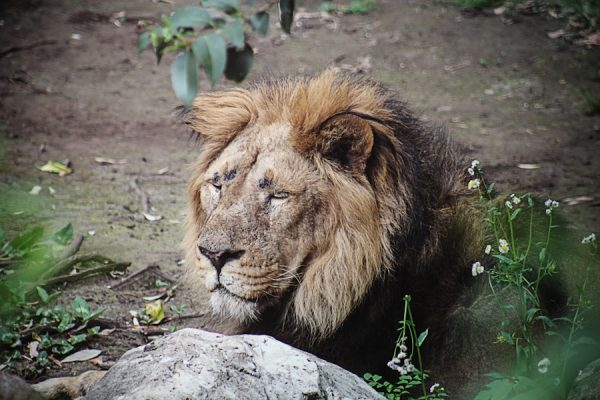 Zoo d'Ueno