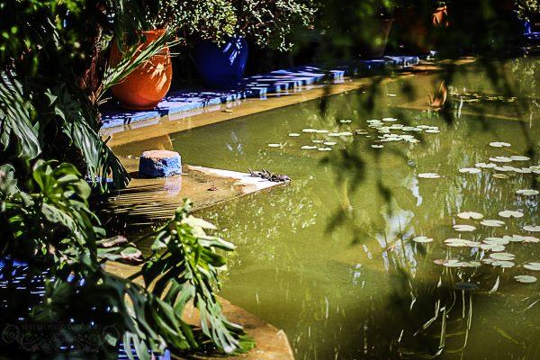 Le jardin de Majorelle