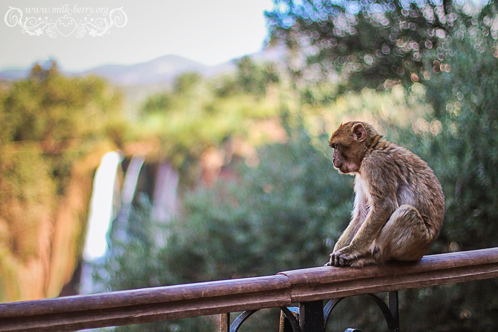 maroc_ouzoud