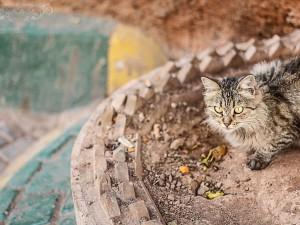 chat_maroc
