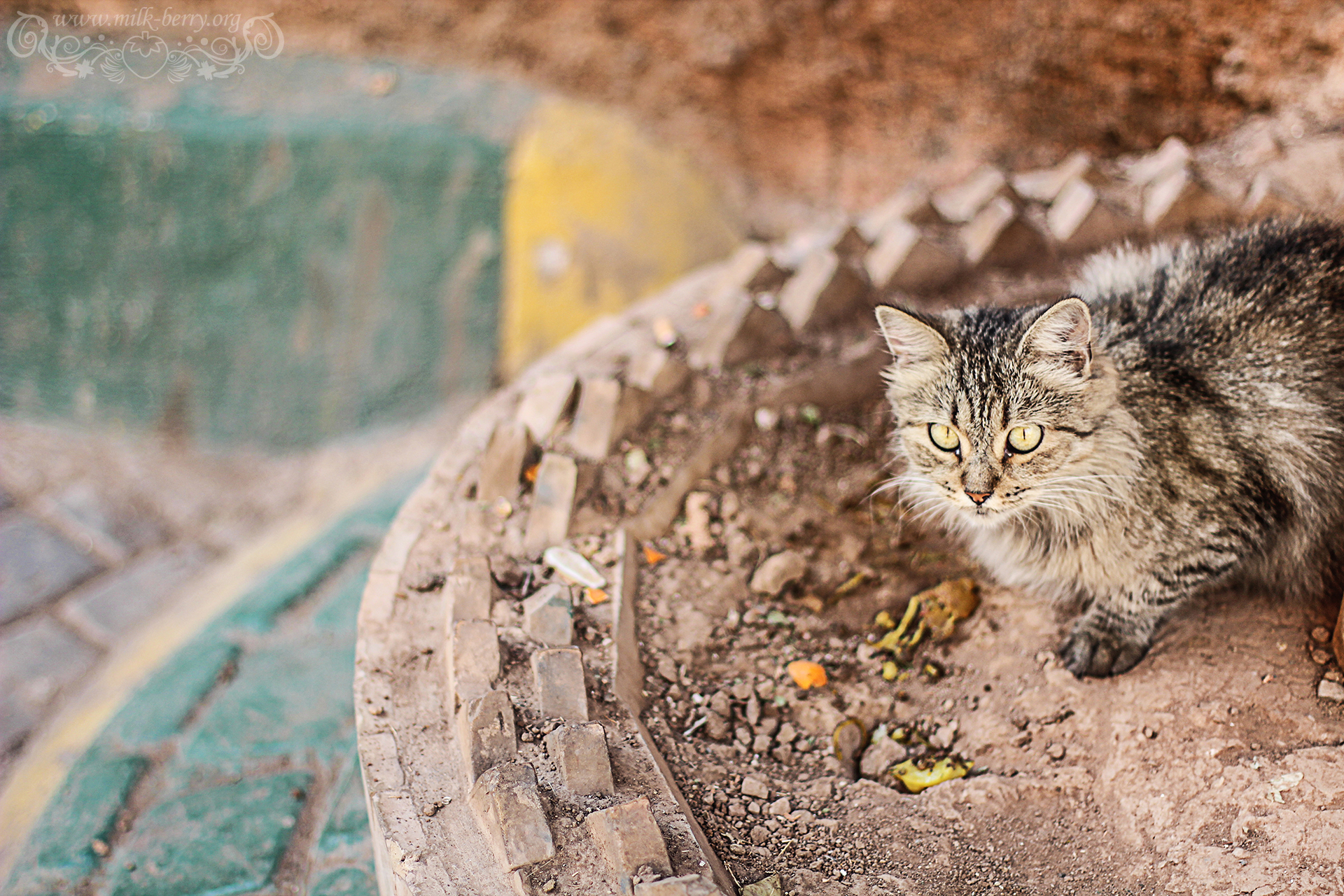 chat morocco