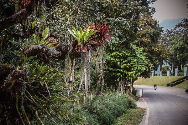 Queen_Sirikit_Botanic_Garden00