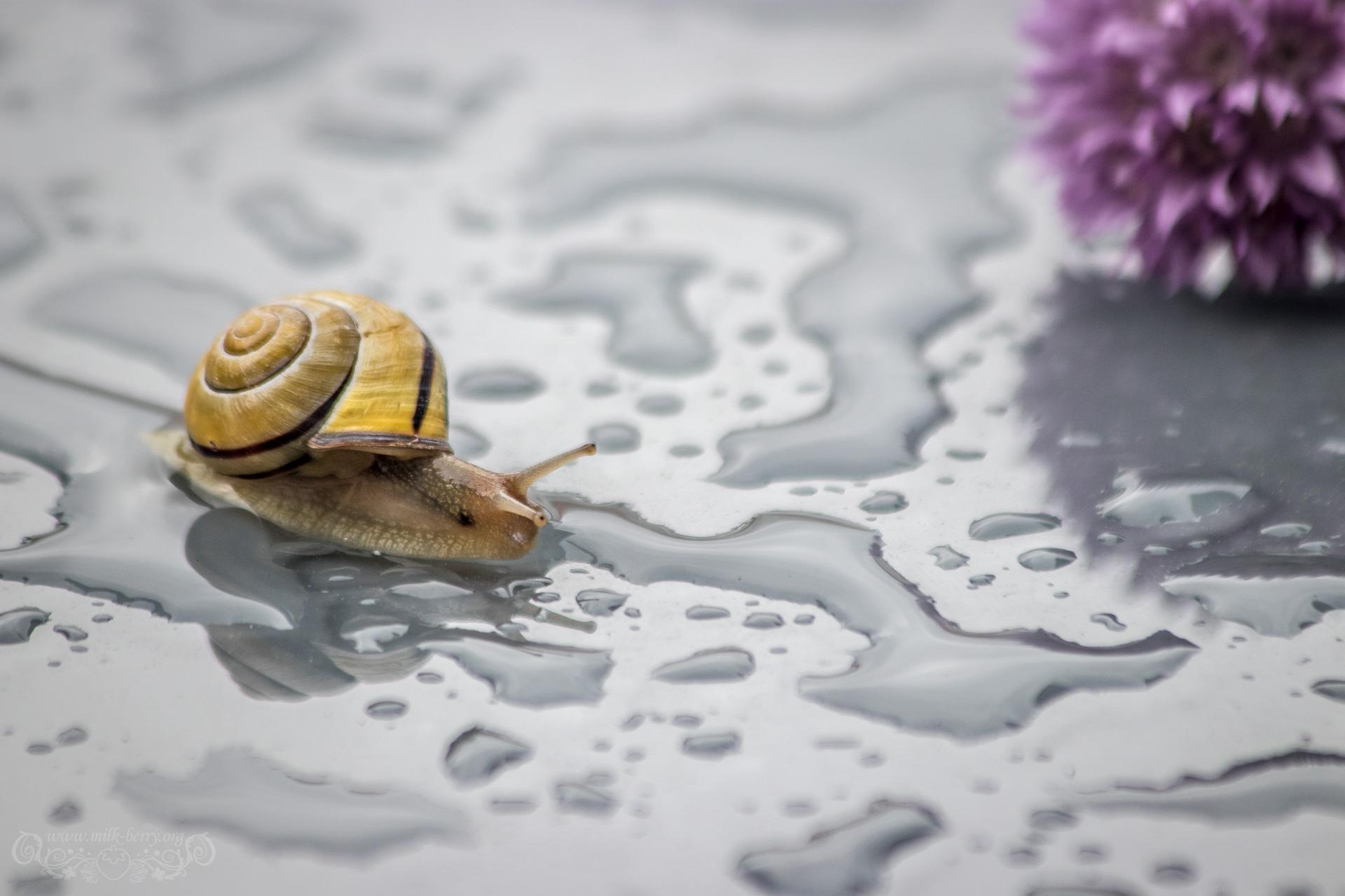 snail05